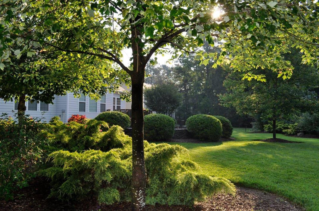 Hedge and shrub trimming service makes your yard the envy of the neighborhood.